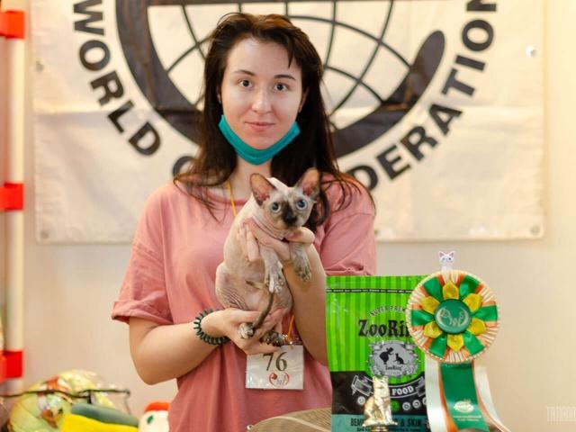 Международная выставка кошек КЛК «DENNIS» в г. Москва 23 августа 2020 года