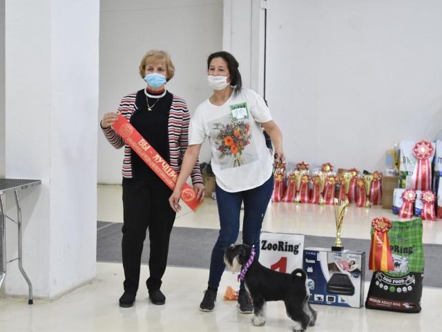 Выставка собак в г. Уфа 17 апреля 2021 года