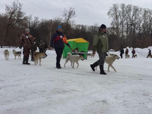 Выставка лаек охотничьих пород в г. Новокузнецк 6 марта 2021 года