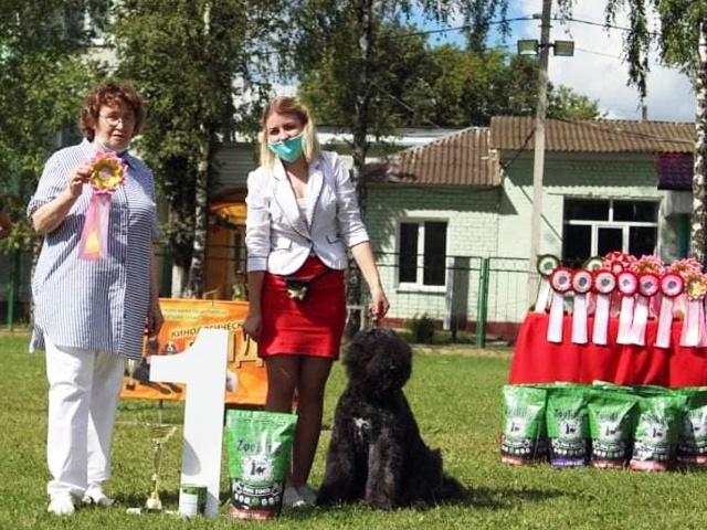 Выставки собак и КЦ «Гранд» в г.Смоленск 8 и 23 августа 2020 года