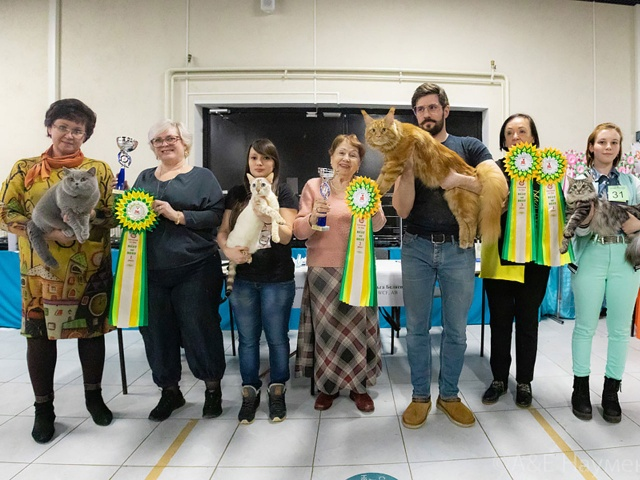 Международная выставка кошек памяти Эльвиры Диановой в г. Москва 20-21 марта 2021 года