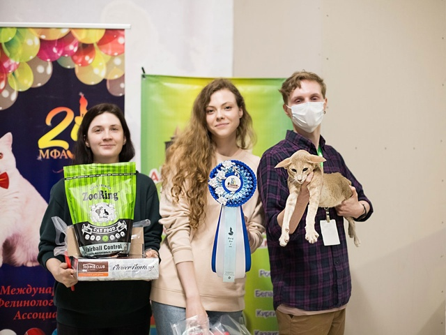 Выставка кошек в г. Коломна 29 августа 2020 года Клуб Алиса