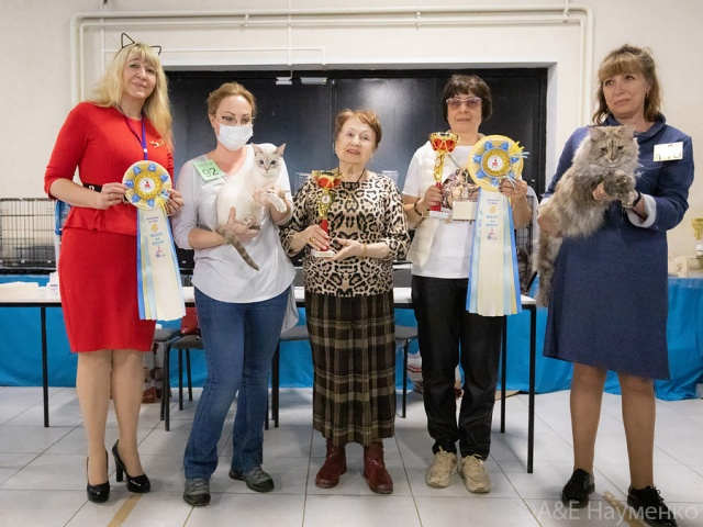 Международная выставка кошек в г. Москва 11 апреля 2021 года