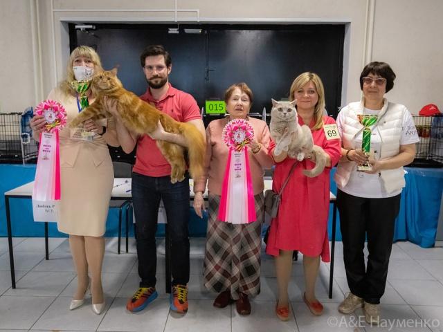 Международная выставка кошек в г. Москва 10 апреля 2021 года