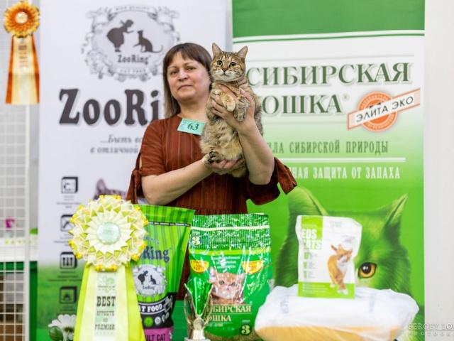 Выставка кошек в Екатеринбурге 12-13 июня