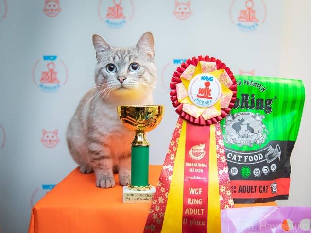 Международная выставка кошек КЛК «Москва» (WCF) в г. Москва 19 сентября 2020 года