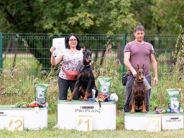 Выставка собак «Добермания 2020» в г. Люберцы 5 сентября 2020 года