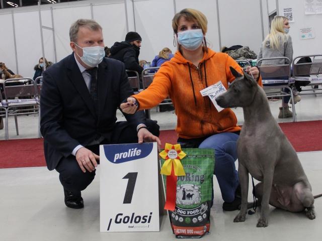 Выставка собак в г. Тюмень 5 декабря 2020 года