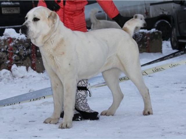 Питомник собак Олан Олжекс