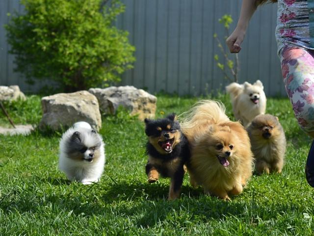Собаки и щенки питомника